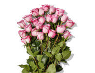 Whole Foods: 2 Dozen Roses – Only $19.99 (Prime Members)